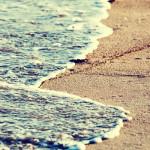 ocean meets beach